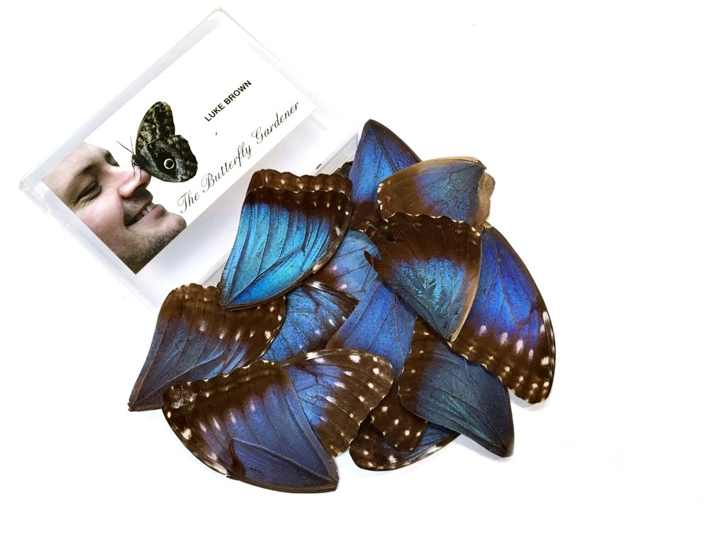 25 MORPHO WINGS 2ND'S