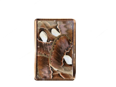 ATLAS MOTH FRIDGE MAGNET