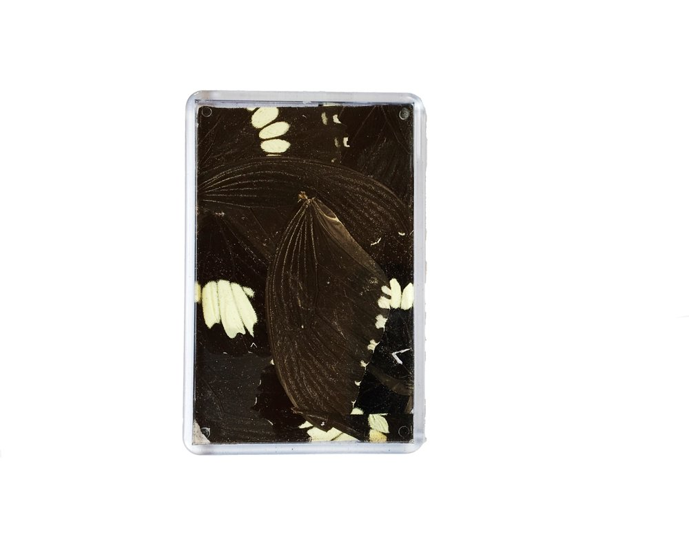 BLACK AND WHITE PAPILLIO FRIDGE MAGNET