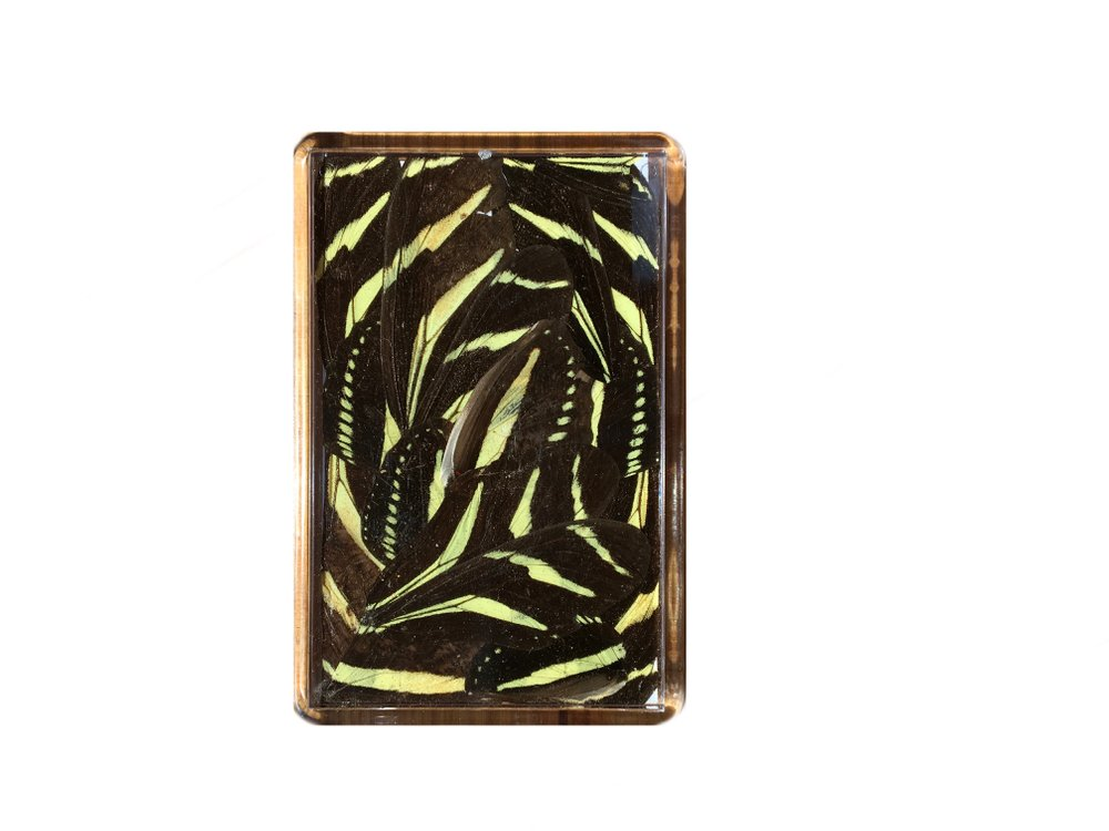 ZEBRA BUTTERFLY FRIDGE MAGNET