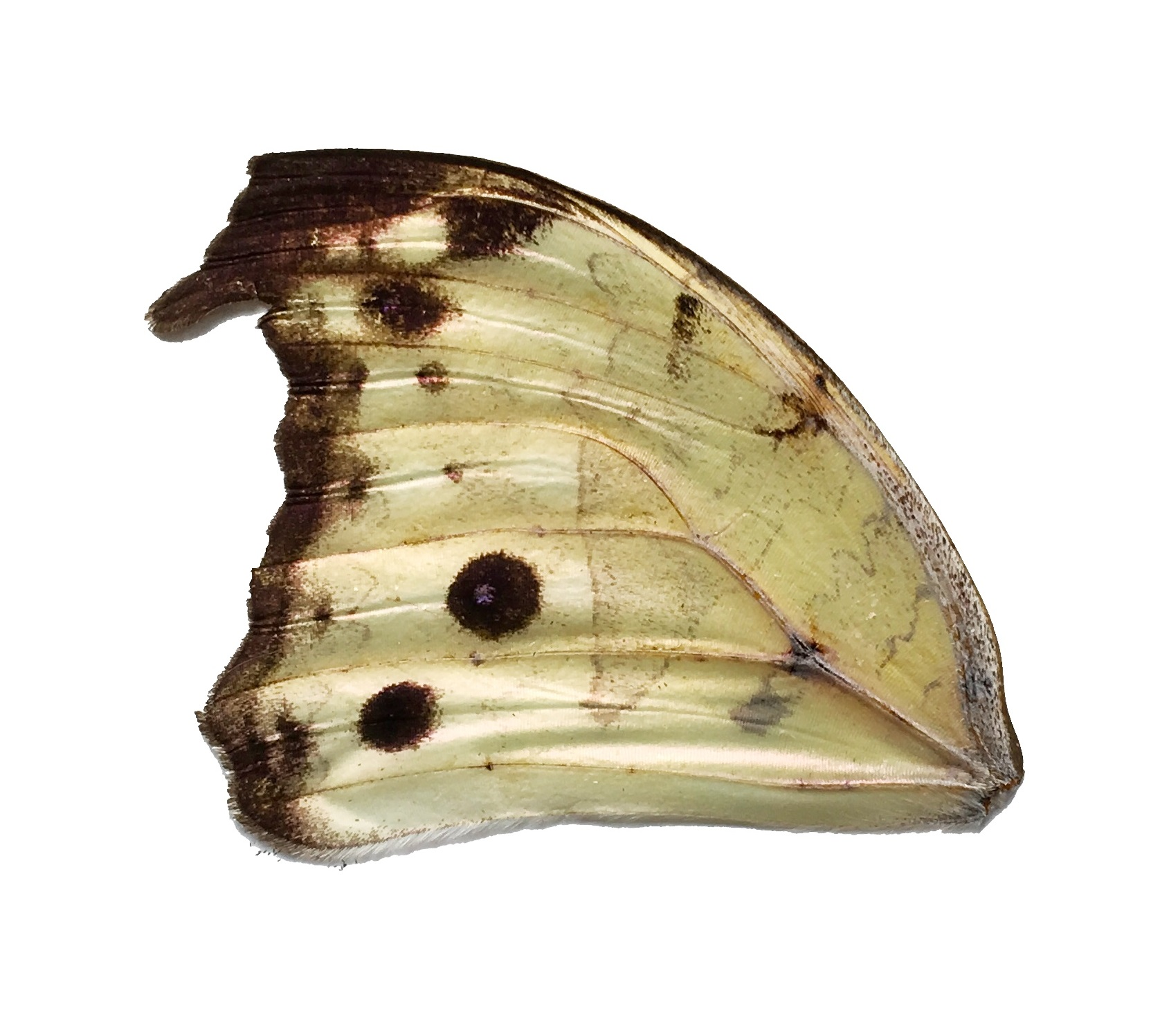 SALAMIS SP FRONT WING
